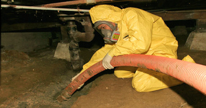mold removal in a basement
