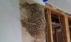 Mold Growth and Water Damage Caused By Wall Leak